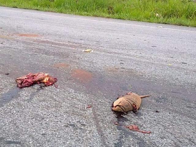 Tatus mortos ficaram espalhados na pista (Foto: Reprodução vídeo)