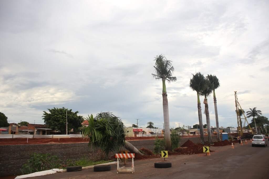 Palmeiras na Avenida Ernesto Geisel na altura do Shopping Norte Sul (Foto: Paulo Francis)