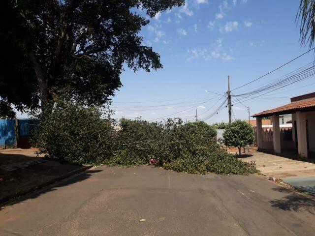 Árvore caiu na Rua João Maiolino, que fica na Vila Concórdia (Foto: