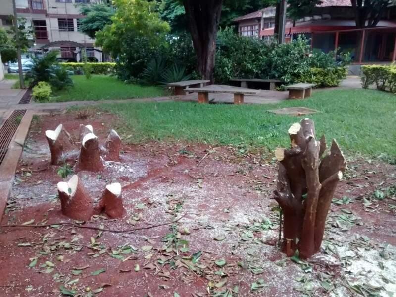 Árvores foram cortadas ontem em residencial. (Foto: Direto das Ruas)