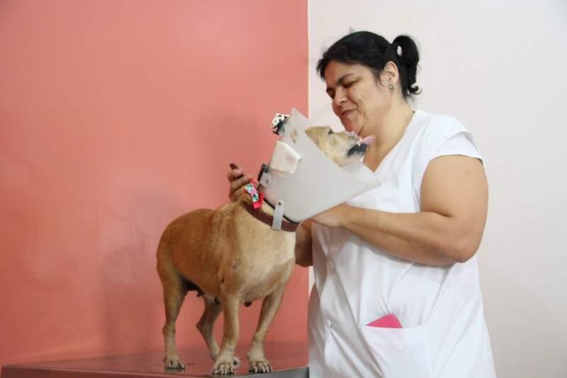 Cadelinha, que aparenta ter cerca de 4 anos, querendo fazer carinho na veterinária. (Foto: Marcos Ermínio)