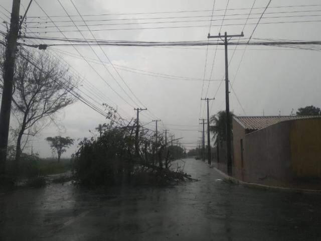 Árvore teria sido partida ao meio, atingida por raio (Foto/Direito das Ruas)