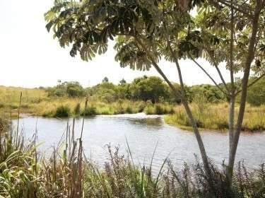 Comissão de Meio Ambiente  visita Córrego Guariroba para verificar manancial