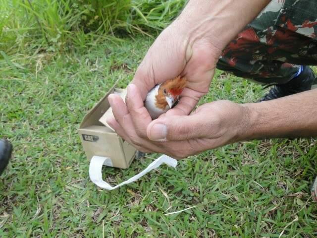 Policial mostra um dos pássaros apreendidos com homem de 63 anos, em Jardim. (Foto:Divulgação PMA)