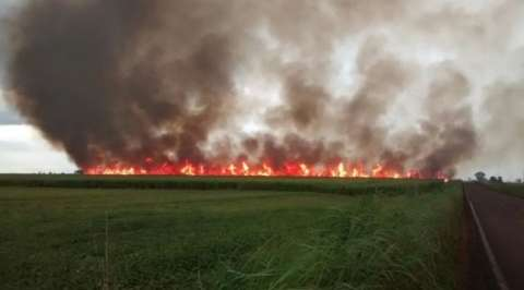 Entidade pede que proprietários encontrem alternativa às queimadas
