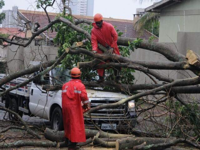 Chuva acompanhada com fortes ventos na Capital derrubou várias árvores nesta tarde (Foto: Paulo Francis)
