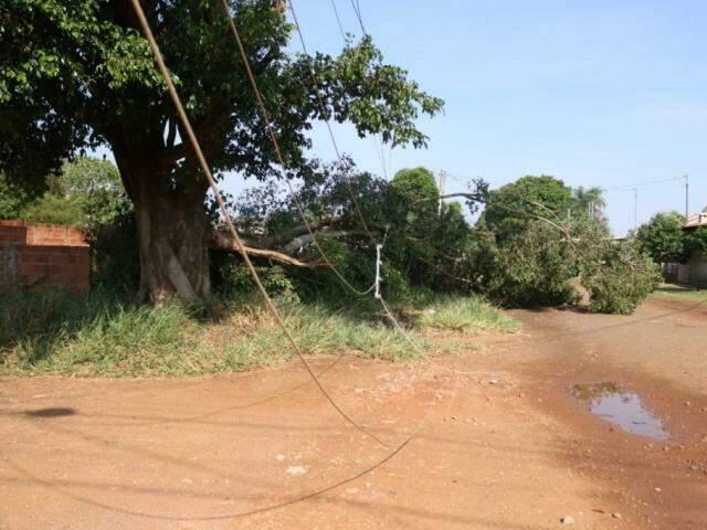 Ventania e chuvas derrubaram galho de imensa árvore na esquina das ruas Lívia com Boanerges Lopes (Foto: Marcos Maluf)