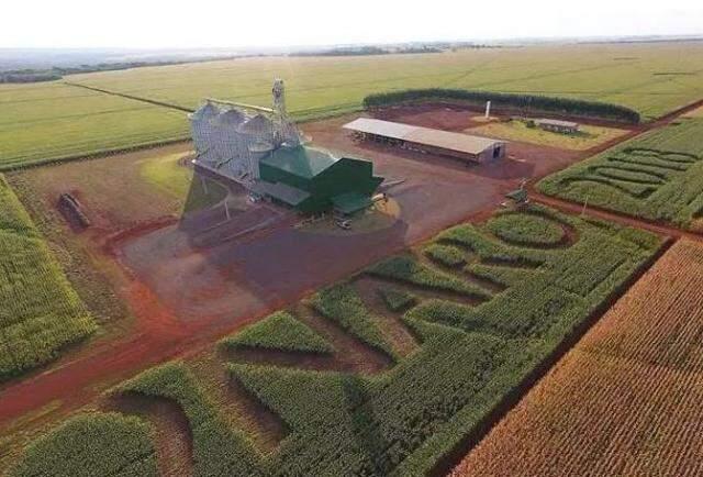 Imagem da plantação em agosto, apenas com o nome do presidente eleito e o ano.