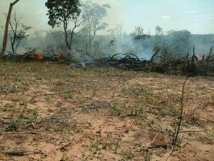 PMA fecha carvoaria e autua seis por desmatamento ilegal em assentamento