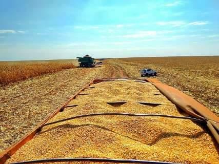 Na maior safra da história, MS colhe 10 milhões de toneladas de milho