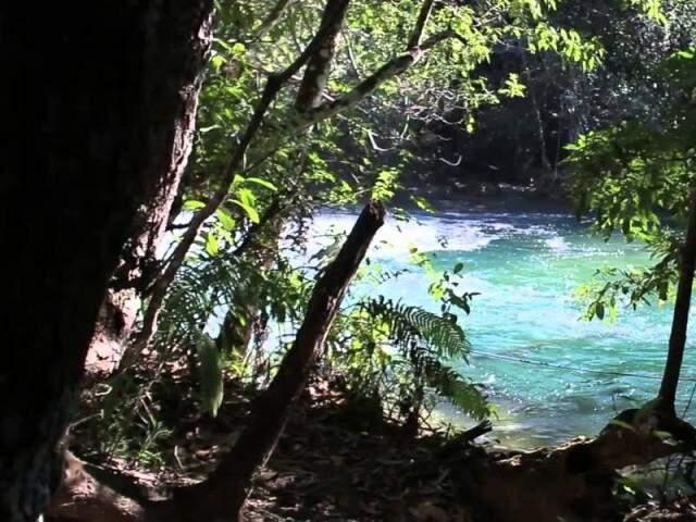 Parte da área por onde corre o Rio Formoso, em Bonito (Foto: Divulgação)