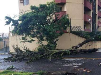 Chuvarada com ventos de 70,92 km/h derrubou ao menos 30 árvores