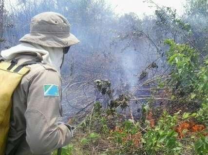 Com chamas de até 5 mt, queimada florestal espalha fumaça pela cidade