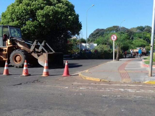 Trecho da avenida Ernesto Giesel foi interditado para realização da poda (Foto: Direto das Ruas)