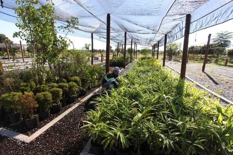 Mudas de várias espécies serão plantadas pela Águas Guariroba no Parque do Sóter (Foto: Divulgação)