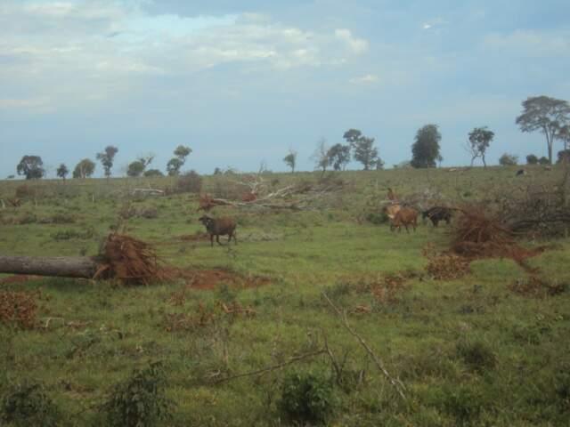 O assentado derrubou 180 árvores de várias especies. (Foto: divulgação)