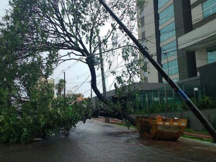 Poste de energia elétrica ficou pendurado após queda de árvore de grande porte na Rua Arthur Jorge (Foto: André Bittar)
