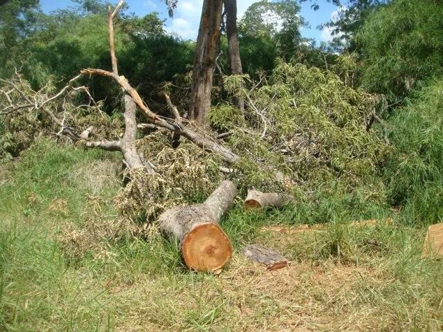 Policiais encontraram aproximadamente 114 hectares desmatados. (Foto: Divulgação)