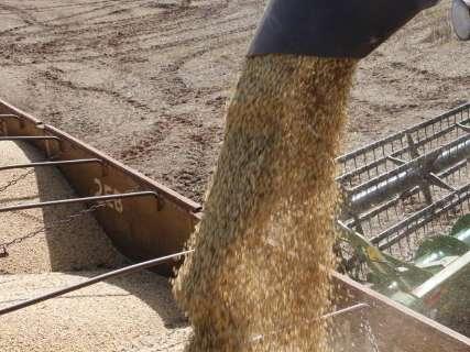 Com crise política e dólar em alta, comercialização de soja dispara