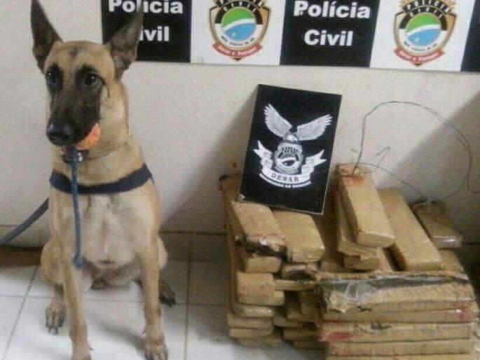 Cães descobriam droga escondida em lateral de carro (Foto: Divulgação/PRF)