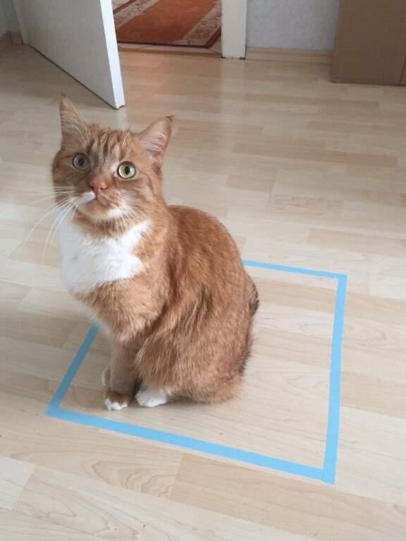 O gato dentro da caixa ou no seu quadrado