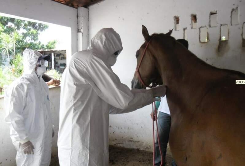 Ceará é um dos estados que está em alerta por causa da doença que afeta cavalos. (Foto: Diário do Nordeste)