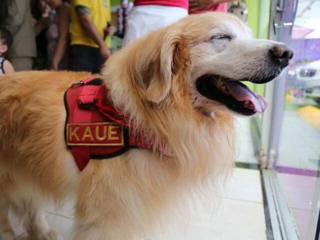 Foi com essa carinha de alegria que Kauê atendeu todas as crianças durante seu tempo como voluntário no projeto do Corpo de Bombeiros. (Foto: Marcos Ermínio)