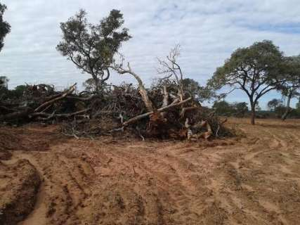 Fazendeiro é multado em R$ 7,2 mil por explorar madeira ilegalmente