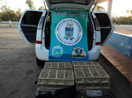 Taxista e passageiro são multados em R$ 319 mil por tráfico de 638 canários