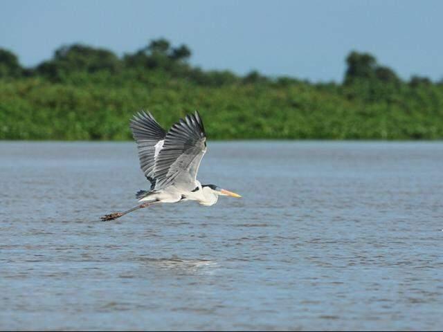 Paisagem do Pantanal, maior planície alagada do mundo (Foto: Ministério do Meio Ambiente)