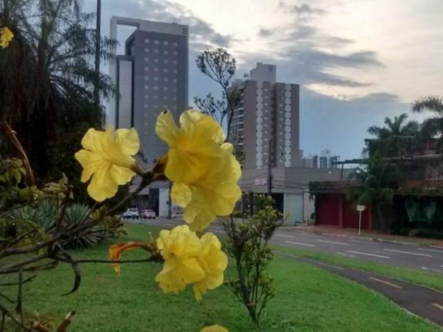 Prédios, flores, árvores e coqueiros compõem cenário com céu entre nuvens na Afonso Pena, uma das avenidas mais movimentadas da cidade (Foto: Simão Nogueira)