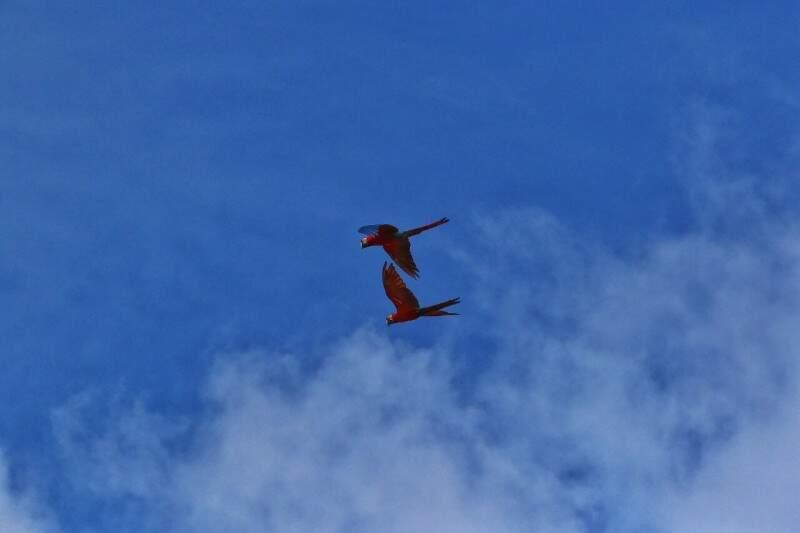 Manhã de sexta-feira em Campo Grande com céu claro e mínima de 21ºC. (Foto: André Bittar)
