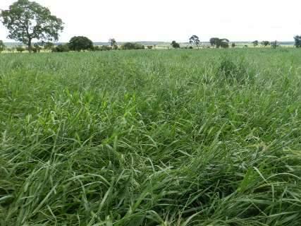 Em nove meses, programa recupera 1,4 mil hectares de pastagens degradadas