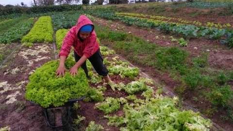 Agricultura familiar em MS terá investimento de R$ 16 milhões em 2018