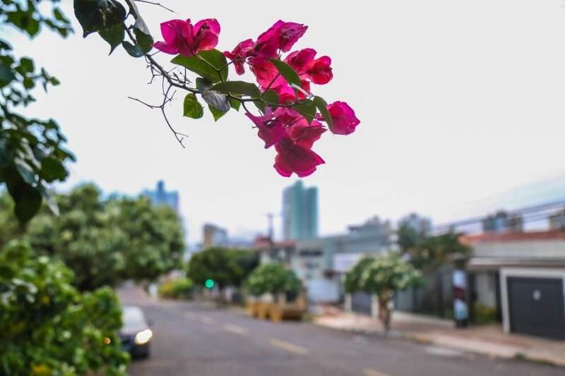 Primavera, estação de altas temperaturas e chuva, segue até dezembro. (Foto: Fernando Antunes)