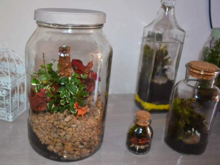 Potes de cozinha viram jardins cheios de vida para decorar qualquer ambiente.