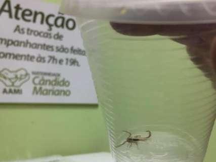 Escorpião aparece em quarto de maternidade e assusta pais
