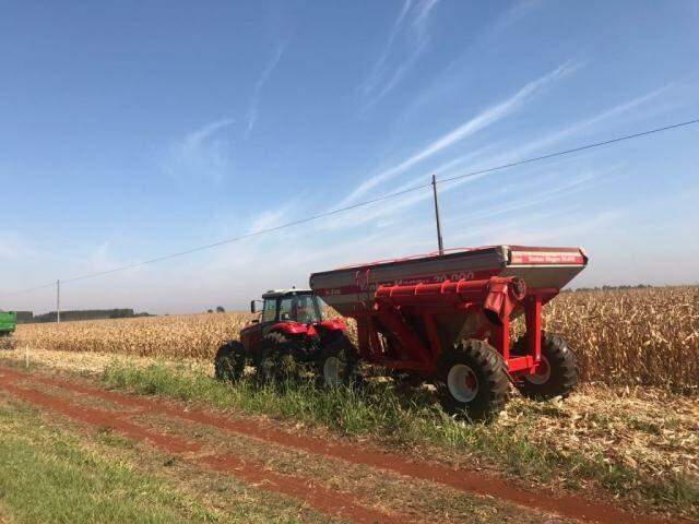 Máquina na colheita de milho em lavoura de MS na semana passada (Foto: Lucimar Couto)