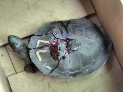 Em 24h, oito animais são resgatados com asas, pernas e casco quebrados