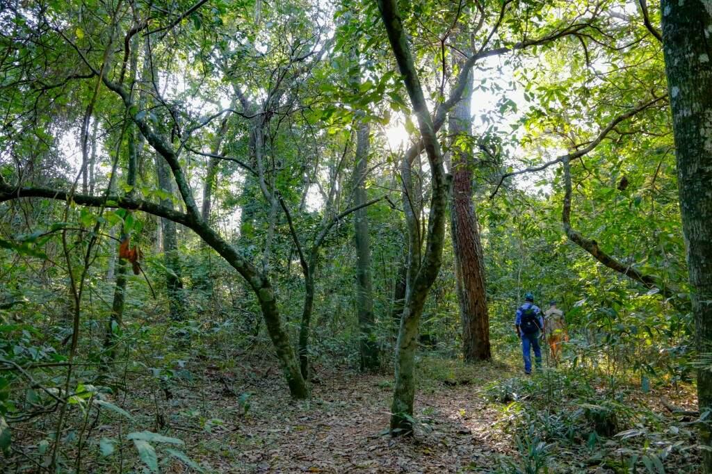 A mata é fechada, mas com o acompanhamento do guia é tranquilo caminhar pelas trilhas do parque (Foto: Kisie Ainoã)