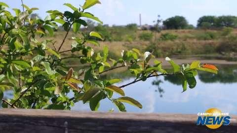 No Dia da Árvore, crianças têm lição de meio ambiente em parque municipal