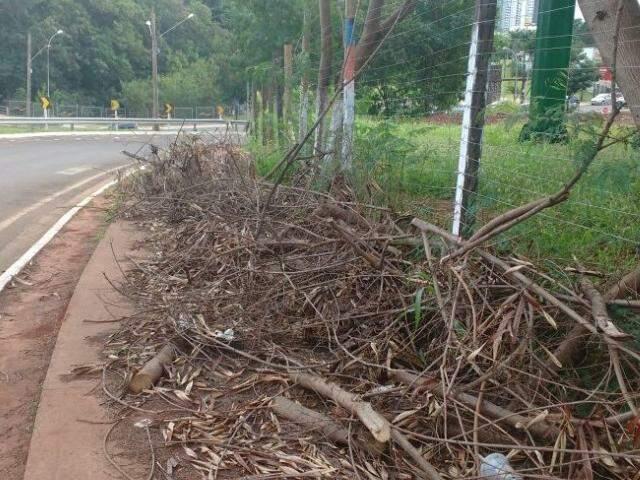 O serviço de poda dos galhos foi feito e os resíduos foram abandonados na calçada. (Foto: Direto das Ruas)