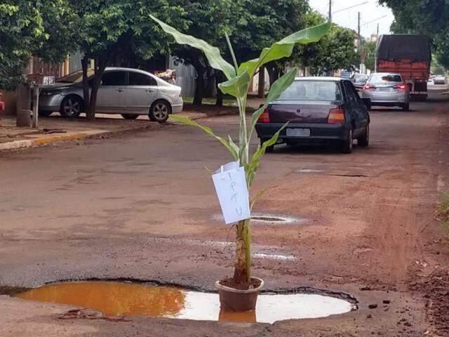 Rua dos Jasmins se tornou curiosidade na Capital por plantação de bananeira no asfalto. (Foto: Direto das Ruas)