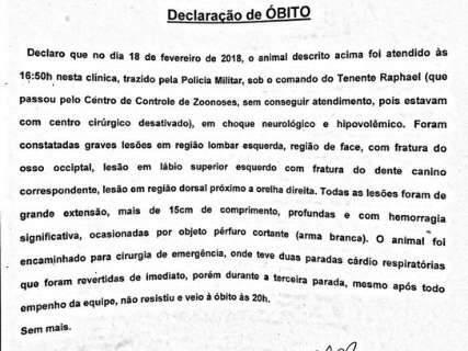 Suspeito de matar pitbull Minnie é multado em R$ 3 mil pela polícia
