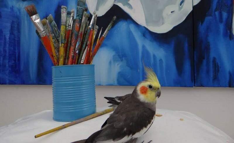 Yuri é o xodó do ateliê da artista plástica (Foto: Arquivo pessoal)