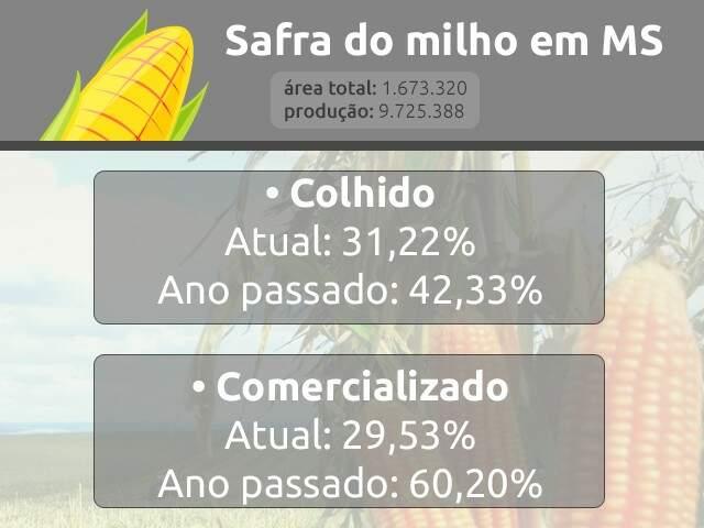 Queda de 60% do preço do milho derruba pela metade venda do grão em MS