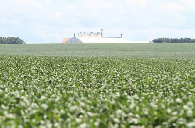 Armazéns ainda têm volume acentuado de milho (Foto: Saul Schramm)