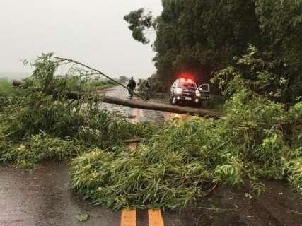 Vendaval derruba árvores em rodovias e chuva alaga cidades de MS