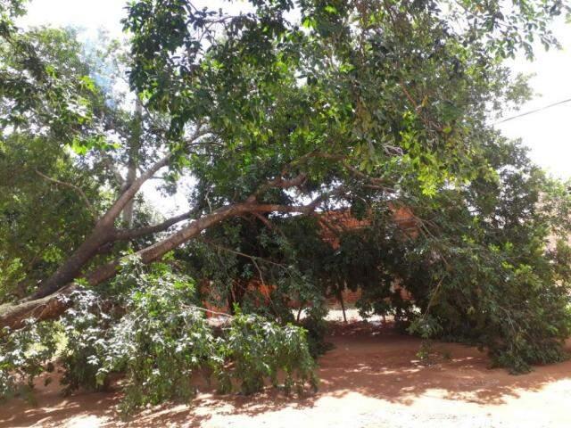 Árvore caída na rua Midas, no Portal Caiobá (Foto: Direto das Ruas)