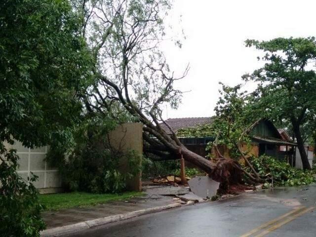 Queda de árvore registrada após forte temporal em Itaquiraí, no final de outubro de 2017. (Foto: Direto das Ruas/Arquivo).